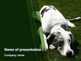 Animals and Pets: Dane PowerPoint Template #06622