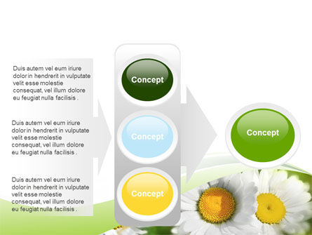 Camomile In The Fields PowerPoint Template Slide 11