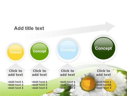 Camomile In The Fields PowerPoint Template Slide 13