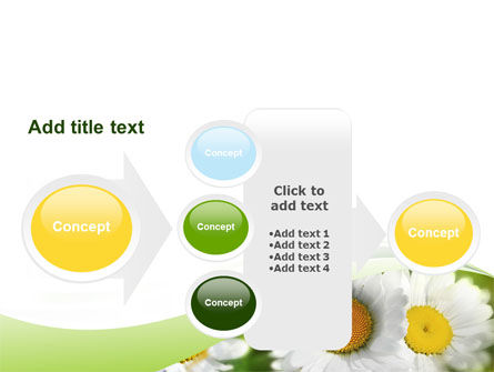 Camomile In The Fields PowerPoint Template Slide 17