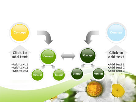 Camomile In The Fields PowerPoint Template Slide 19