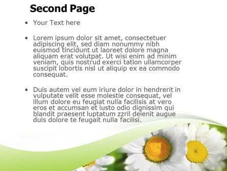 Camomile In The Fields PowerPoint Template Slide 2