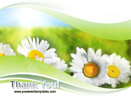 Camomile In The Fields PowerPoint Template Slide 20