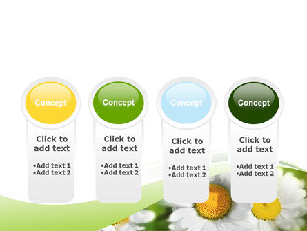 Camomile In The Fields PowerPoint Template Slide 5