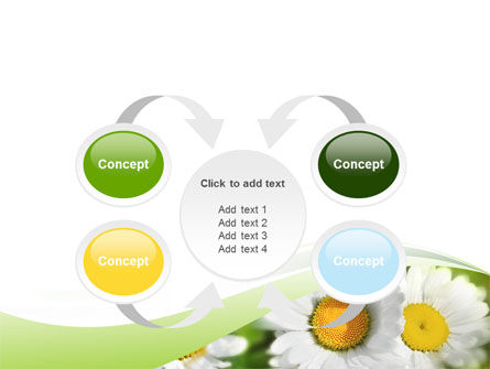 Camomile In The Fields PowerPoint Template Slide 6