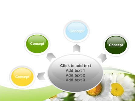 Camomile In The Fields PowerPoint Template Slide 7