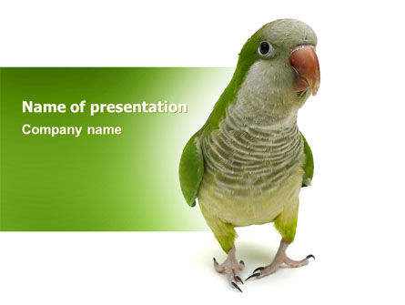 Nature & Environment: Quaker Parrot PowerPoint Template #06678