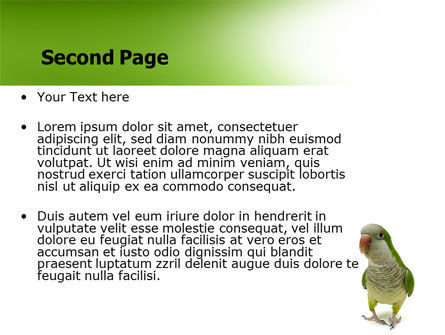 Quaker Parrot PowerPoint Template, Slide 2, 06678, Nature & Environment — PoweredTemplate.com