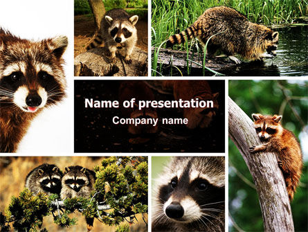 Animals and Pets: Raccoon Free PowerPoint Template #06692