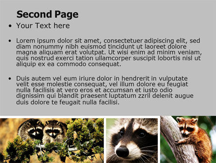 Raccoon Free PowerPoint Template, Slide 2, 06692, Animals and Pets — PoweredTemplate.com