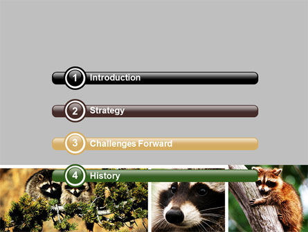 Raccoon Free PowerPoint Template, Slide 3, 06692, Animals and Pets — PoweredTemplate.com