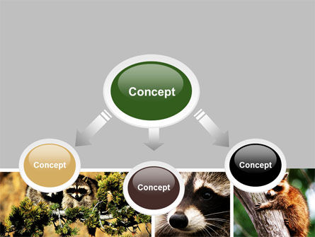 Raccoon Free PowerPoint Template, Slide 4, 06692, Animals and Pets — PoweredTemplate.com