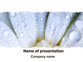 Holiday/Special Occasion: Camomile in Dew PowerPoint Template #06698