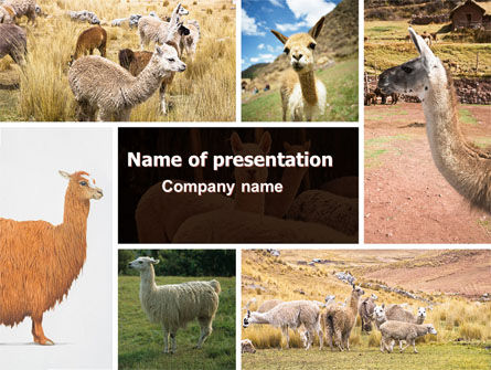 Lama Free PowerPoint Template, 06716, Agriculture — PoweredTemplate.com