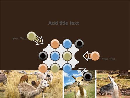 Free Lama PowerPoint Template Slide 10