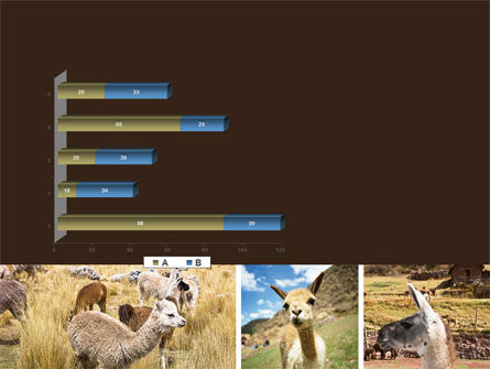 Free Lama PowerPoint Template Slide 11