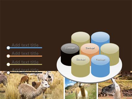 Free Lama PowerPoint Template Slide 12