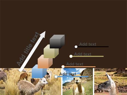 Free Lama PowerPoint Template Slide 14
