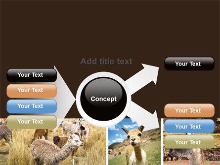 Free Lama PowerPoint Template Slide 15