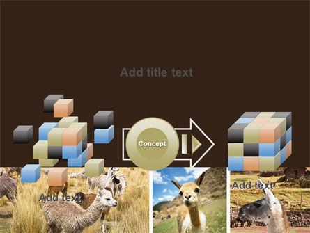 Free Lama PowerPoint Template Slide 17