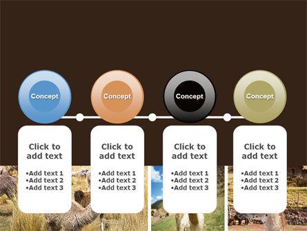 Free Lama PowerPoint Template Slide 5