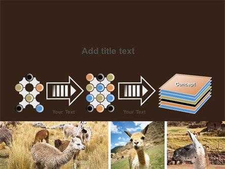Free Lama PowerPoint Template Slide 9