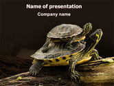Animals and Pets: Two Turtles PowerPoint Template #06741