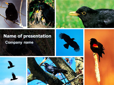 Blackbird Free PowerPoint Template, 06751, Animals and Pets — PoweredTemplate.com