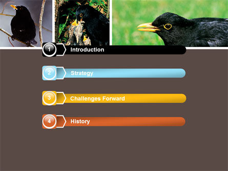 Blackbird Free PowerPoint Template, Slide 3, 06751, Animals and Pets — PoweredTemplate.com