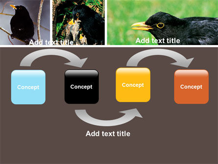 Blackbird Free PowerPoint Template, Slide 4, 06751, Animals and Pets — PoweredTemplate.com