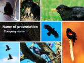 Animals and Pets: Blackbird Free PowerPoint Template #06751