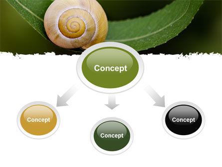 Snail Shell PowerPoint Template, Slide 4, 06761, Animals and Pets — PoweredTemplate.com