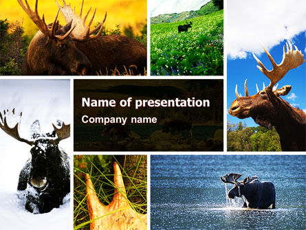 Animals and Pets: Moose PowerPoint Template #06785