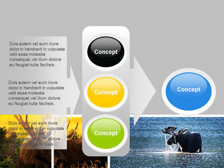 Moose PowerPoint Template Slide 11