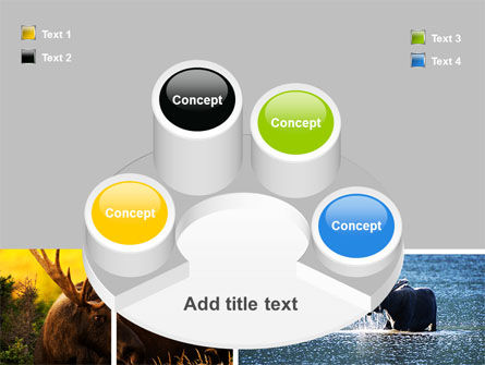Moose PowerPoint Template Slide 12