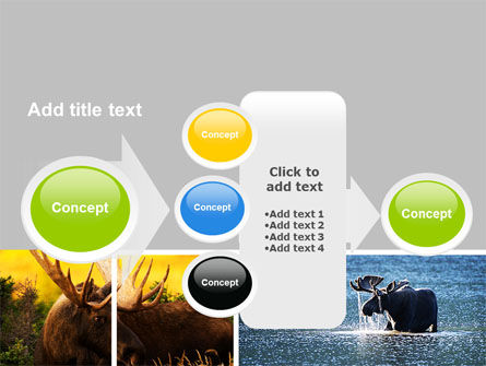 Moose PowerPoint Template Slide 17