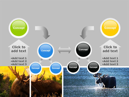 Moose PowerPoint Template Slide 19