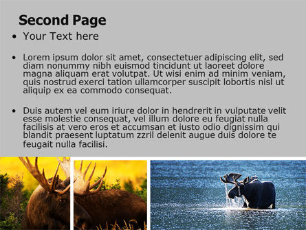 Moose PowerPoint Template, Slide 2, 06785, Animals and Pets — PoweredTemplate.com