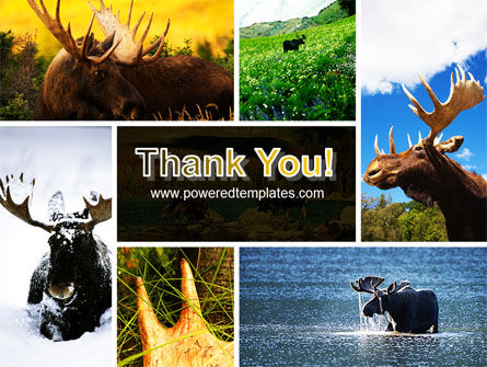 Moose PowerPoint Template Slide 20