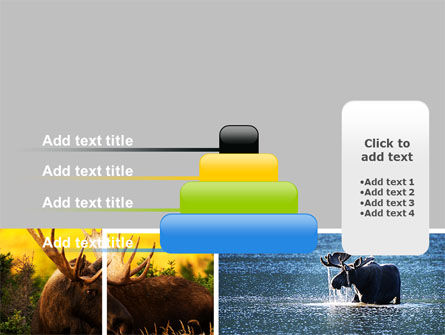 Moose PowerPoint Template Slide 8