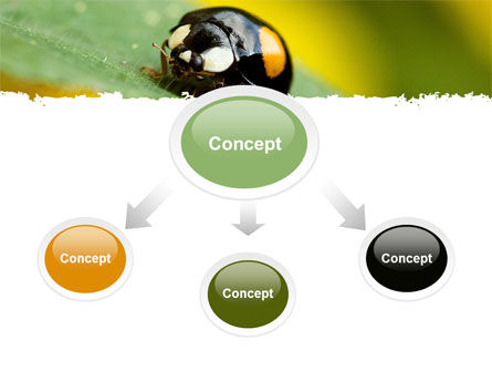 Bug On Green Leaf PowerPoint Template, Slide 4, 06797, Animals and Pets — PoweredTemplate.com