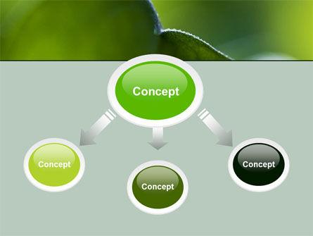 Leaf PowerPoint Template, Slide 4, 06810, Nature & Environment — PoweredTemplate.com