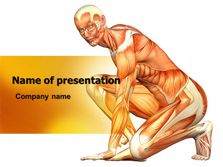 Medical: Muscles Of The Human Body PowerPoint Template #06941