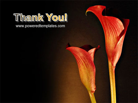 Red Calla PowerPoint Template Slide 20