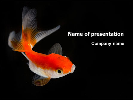 Animals and Pets: Goldfish On The Black Background PowerPoint Template #07074