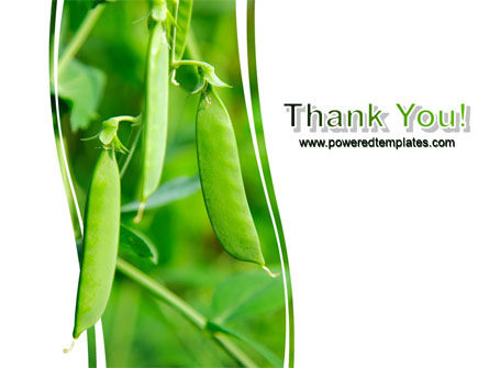 Pea Pods PowerPoint Template Slide 20