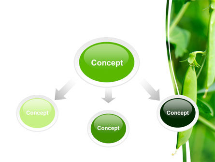 Pea Pods PowerPoint Template, Slide 4, 07180, Agriculture — PoweredTemplate.com