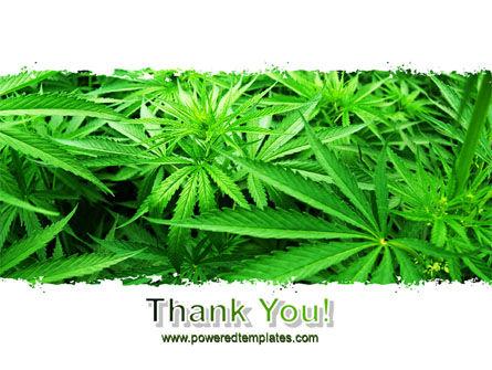 Cannabis PowerPoint Template Slide 20