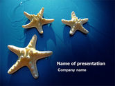 Animals and Pets: Starfish Achtergrond PowerPoint Template #07412
