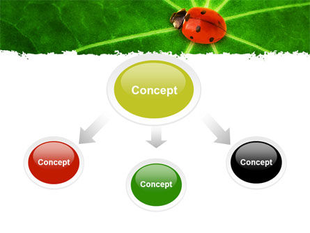 Bug on Leaf PowerPoint Template, Slide 4, 07430, Nature & Environment — PoweredTemplate.com
